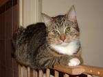 Nilwik Cats Jonathan