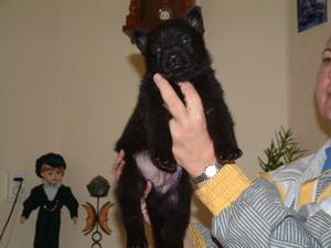 Jäger Kurt van het Zuidpark 5 weken oud
